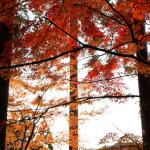 [秋の京都]紅葉散策[大原]