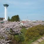 これぞ函館五稜郭の桜達2015