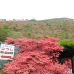 [函館市:恵山]まもなく開催恵山つつじまつり