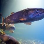 山の水族館はお魚の魅せ方面白い!